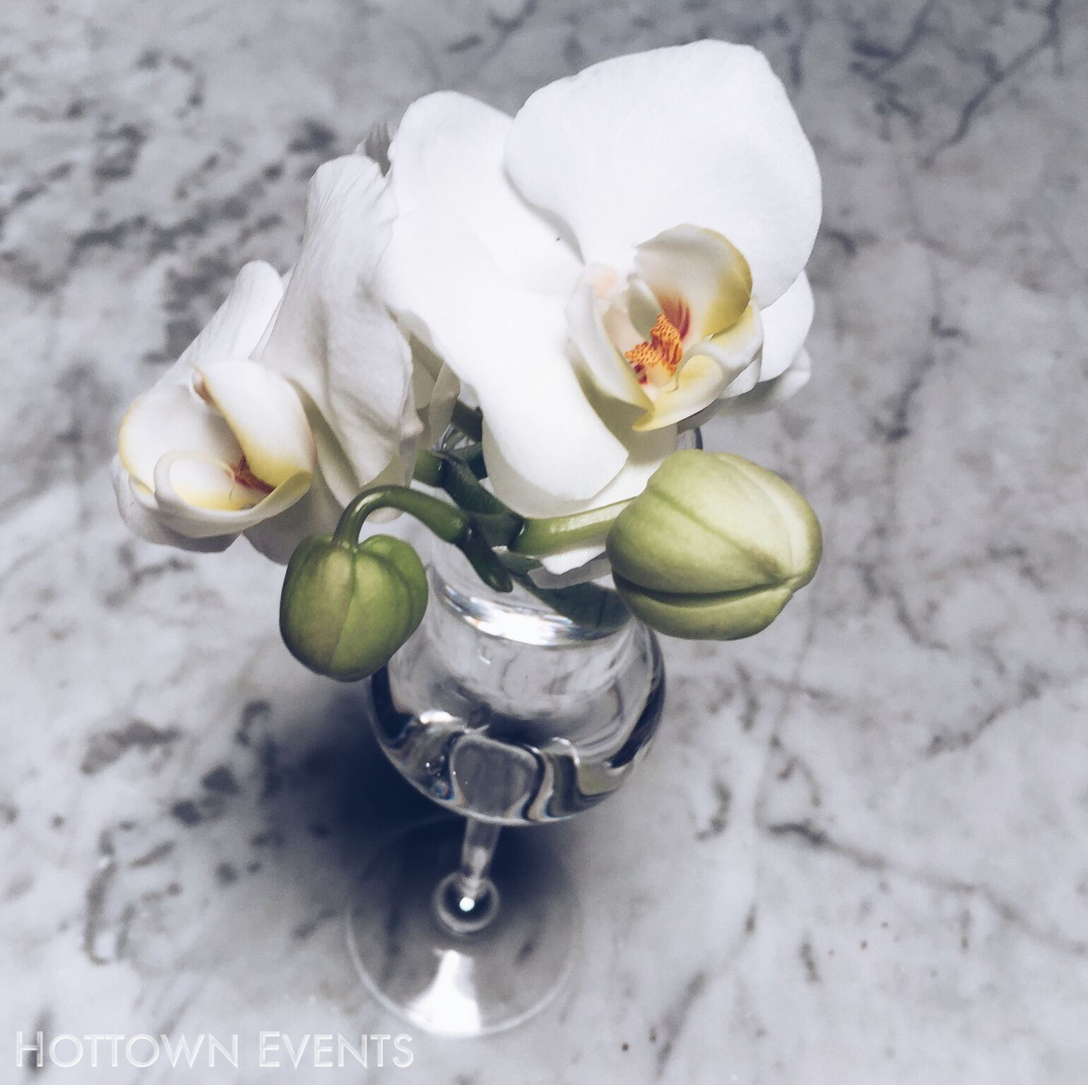 <h5>Small table top Orchid arrangement</h5>